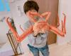 辻希美、巨大蟹が大量に届くもなぜか「食べる資格なし」と批判殺到のワケ